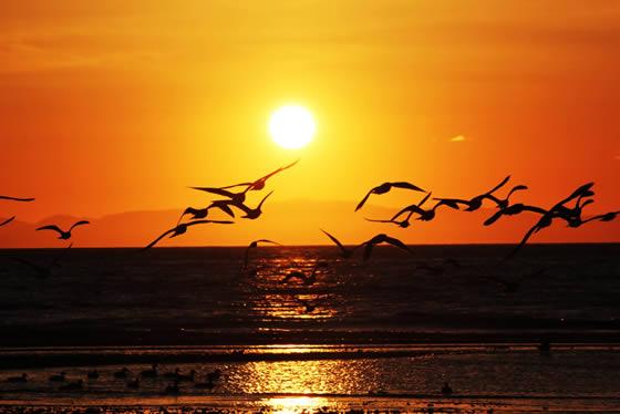 Seagull Sunrise 560