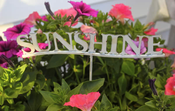 flowers with word sunshine 600